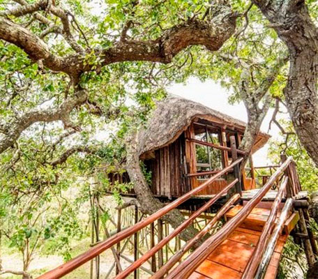 Tree house south africa